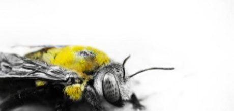 DOWNLOAD / The Bee - Beelogic
